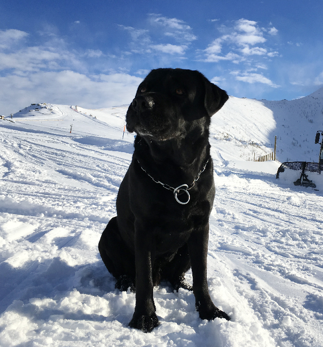 II Zampettata sulla neve